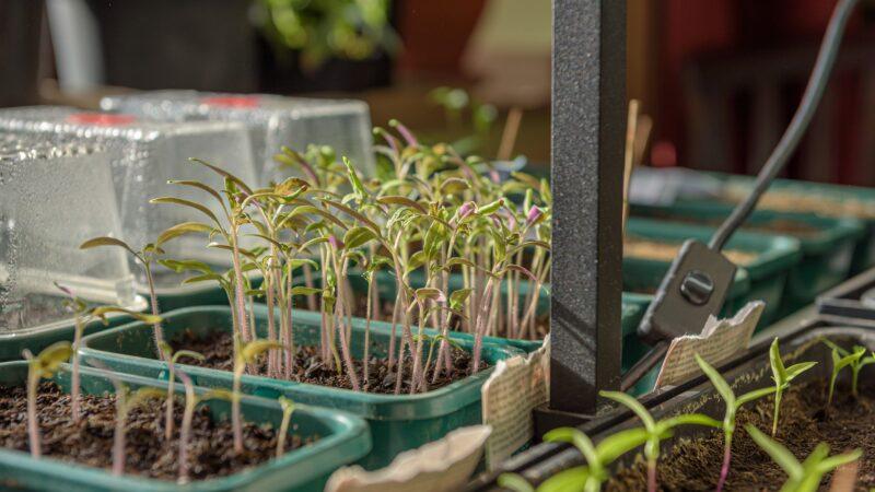 Savjeti za uzgoj bilja i povrća na balkonu