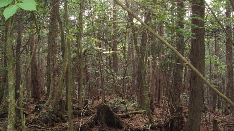 Otkriva li se tajna šume AOKIGAHARA?