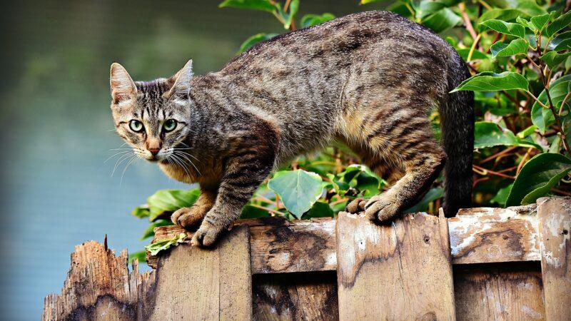 Kako otjerati lutajuće mačke iz vrta?